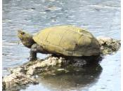 Coldwater Farm Wildlife Update
