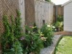 Garden Photography Diary