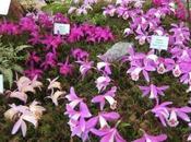 Malvern Spring Festivals Nurseries