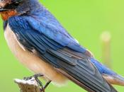 Oil, Natural Development Affects Forest Songbirds