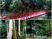 Bogor: Botanical Garden Culinary Adventure!