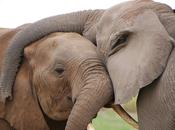 'More Than Just Numbers Game': Killing Elephants Affects Their