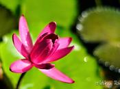 Photoblog: Queen Elizabeth Botanic Park