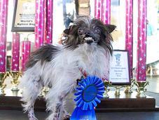Ugliest 2014 Winner Brings Awareness Animal Rescue
