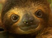 It's Sloth Week! Time Sloth-ings Down