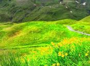 Mountain Wild Flowers Jungfrau Region