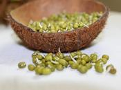 Sprouting Mung Beans Home Made Sprouts