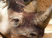 Stop South African Mine That Threatens Rhino Sanctuary Petition Site