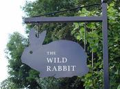 Lunch Wild Rabbit