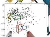 Species Form Same Songbirds?