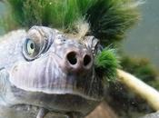 Rare Unusual Turtles Tortoises