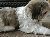 Pupdate Ridiculously Photogenic Puppy